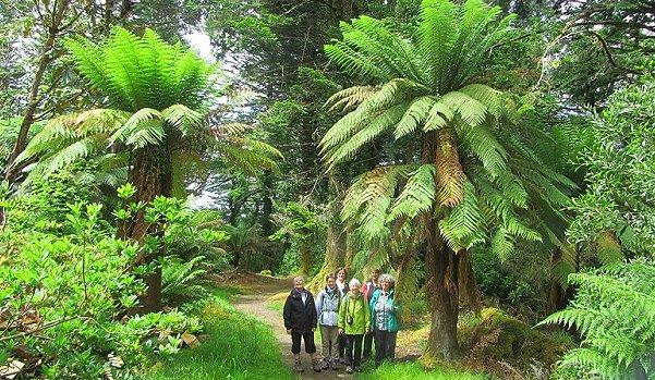Gartenreisen Südwest Irland
