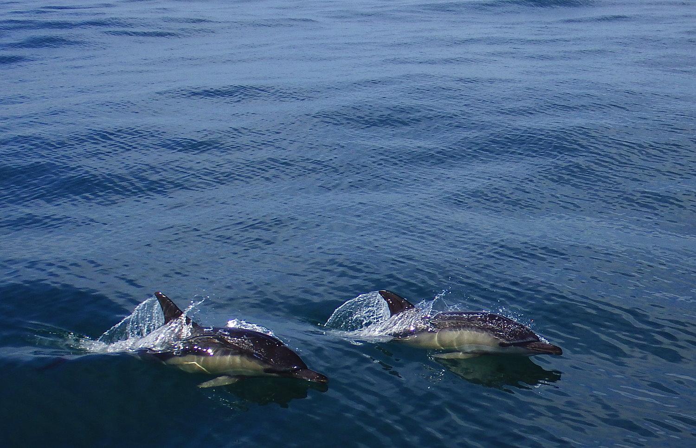 Aktivferien Irland Wanderlust Delfine