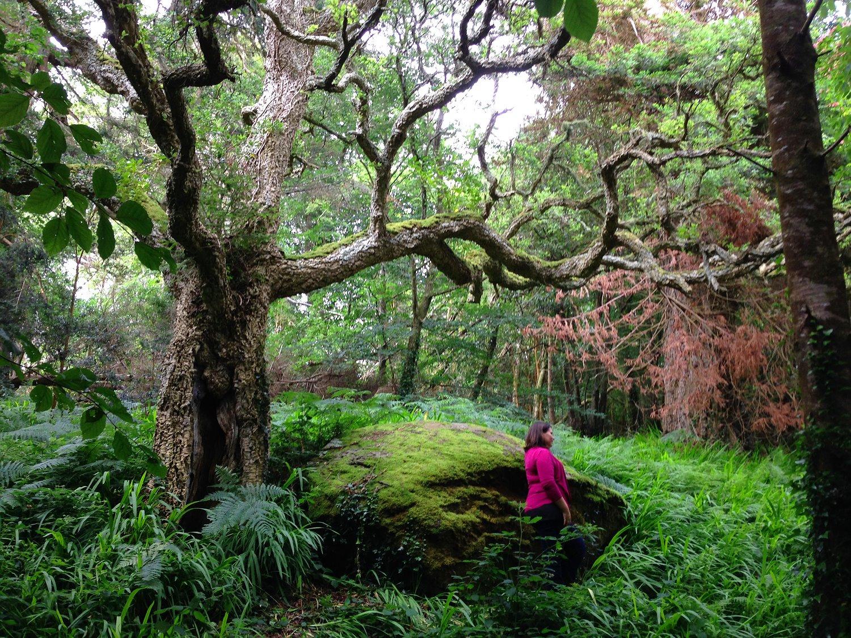 Irland Kräuterwandern Ardnagashel