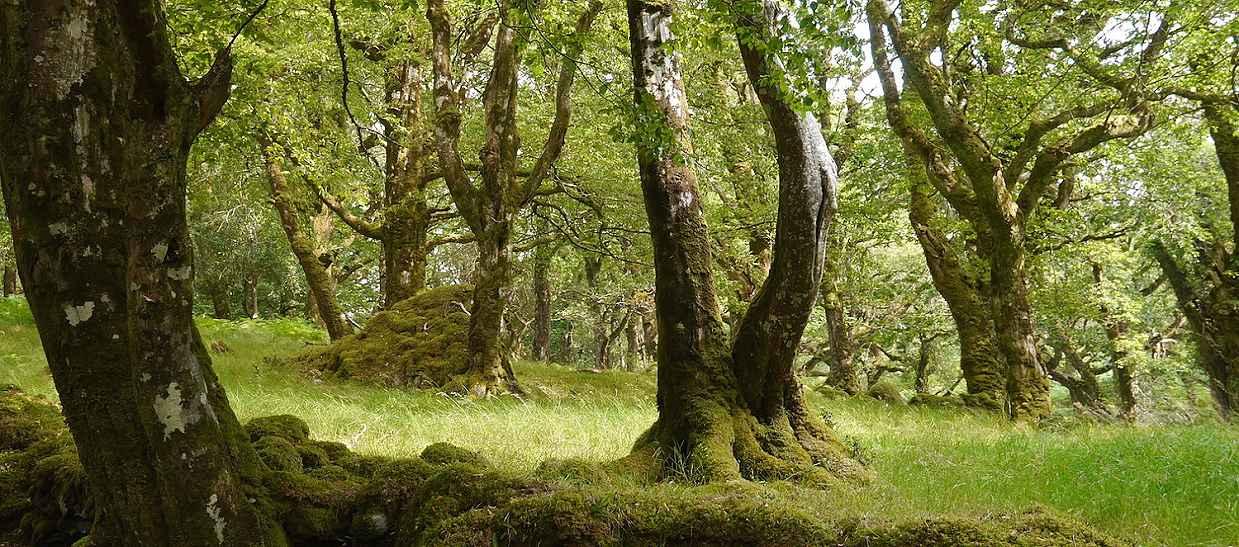Irland Wandern Eichenwald