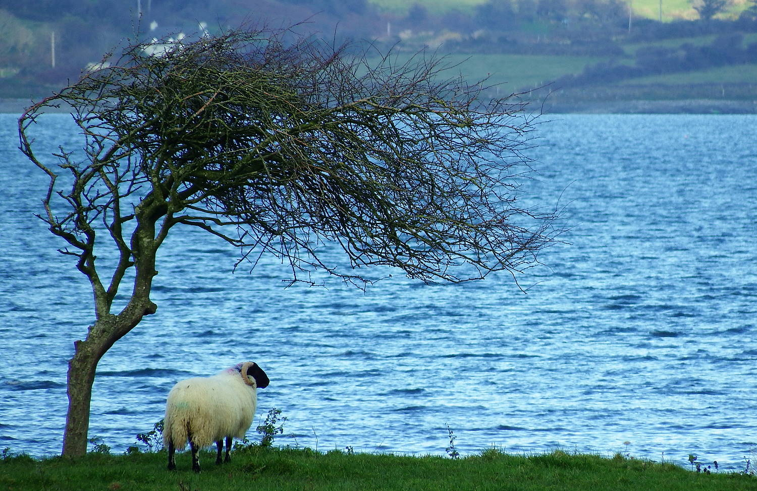 Wanderlust Irland Sheeps Head