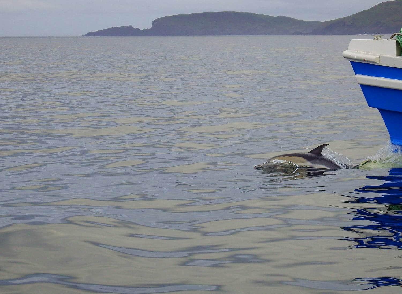 Irland Aktivferien Delfintour