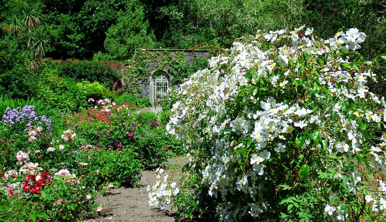 Gartenreisen Irland Wanderlust Markus Baeuchle