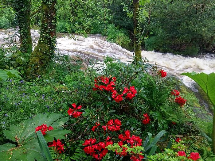 Gartenreisen Irland Wanderlust Markus Baeuchle Wisman's Garden
